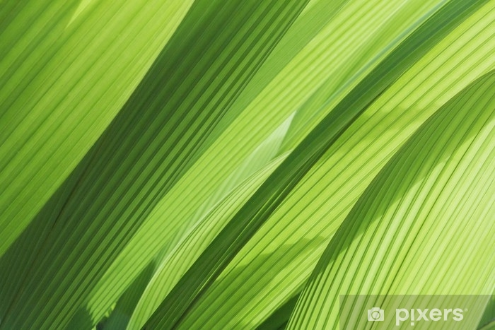 Fotomural Autoadhesivo Greenery background abstract palm leaf - Plantas y flores