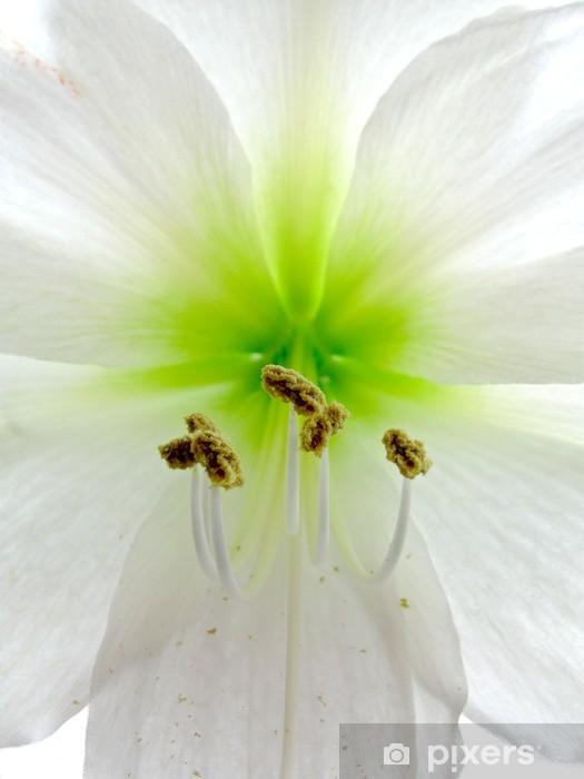 Sticker Pixerstick Amarillis - Fleurs