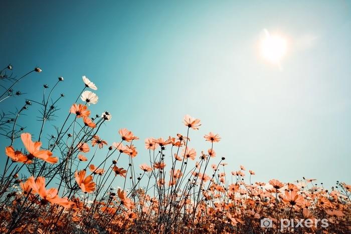 Vinylová fototapeta Vintage krajina příroda pozadí krásné kosmos květina pole na obloze se slunečním světle na jaře. efektivní filtrační efekt barevného tónu - Vinylová fototapeta