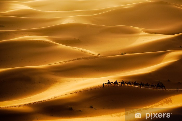 Fototapeta winylowa Camel caravan - Tematy