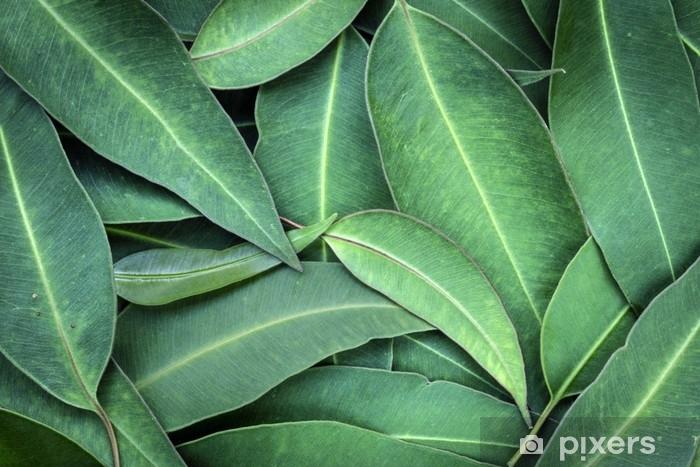 Fotomural Estándar Eucalipto deja la vista superior de fondo de fotograma completo - Plantas y flores