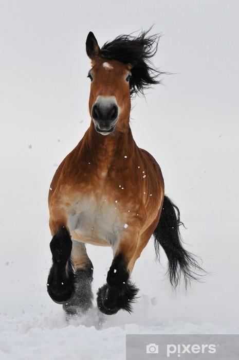 Papier peint vinyle Running Horse - Mammifères