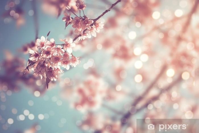 Sticker Pixerstick Gros plan de belle fleur de sakura vintage (fleur de cerisier) au printemps. style de tonalité de couleur vintage. - Plantes et fleurs