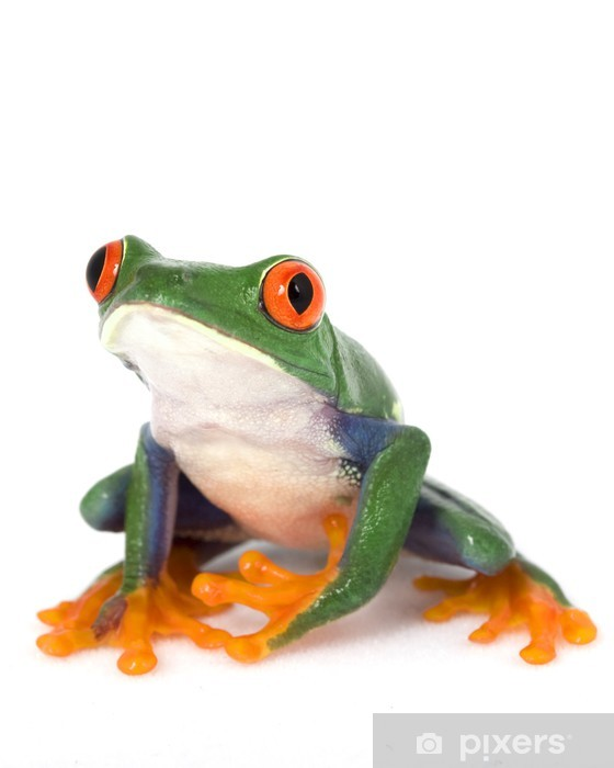 Red-eyed Tree Frog Pixerstick Sticker - Other Other