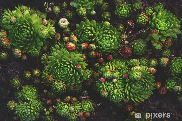 Sticker Pixerstick Plante succulente fond naturel dans des couleurs chaudes et foncées douces avec l'humeur vintage. mur végétal organique lumineux et frais. - Plantes et fleurs