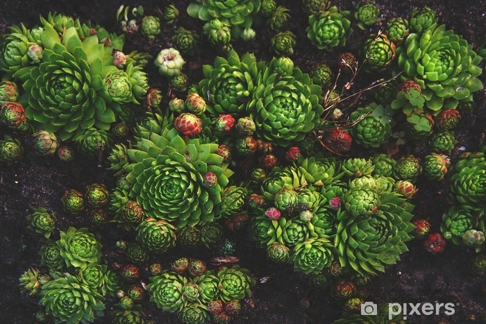 Succulent plant natural background in soft warm and dark colors with vintage mood. Bright and fresh organic plant wall. Pixerstick Sticker - Plants and Flowers