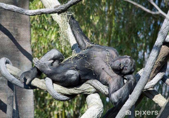 863593ed7e2c5 Fototapete Verspielt Gorilla • Pixers® - Wir leben
