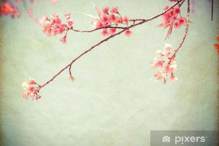 Fototapeta winylowa Pocztówka rocznika papieru - piękny kwiat drzewa sakura (kwiat wiśni) na wiosnę. styl vintage kolor dźwięku. - Zasoby graficzne