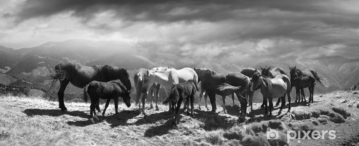 Fototapeta winylowa Konie na szczycie góry - Zwierzęta