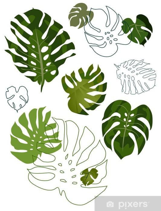 Papier peint vinyle Ensemble de feuilles de philodendron - Plantes