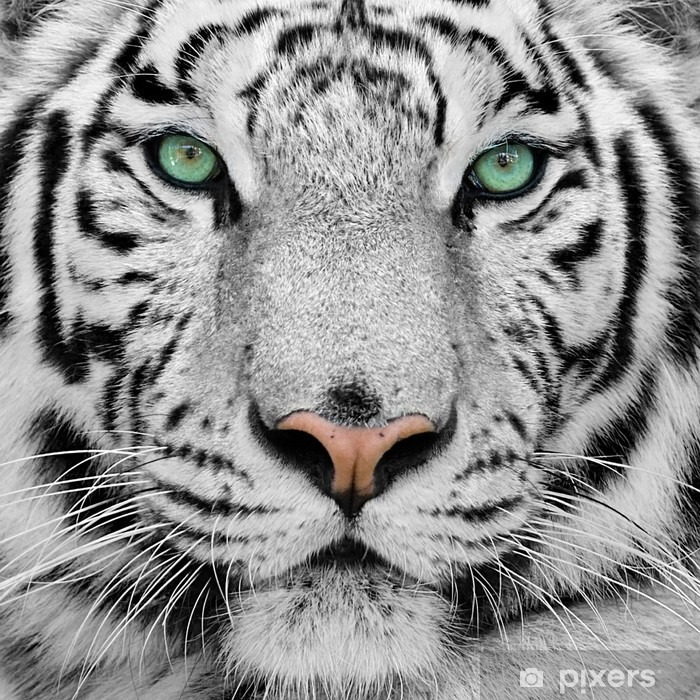 white tiger Vinyl Wall Mural -