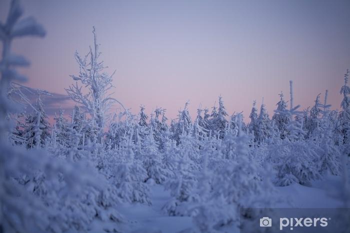 Fototapeta winylowa Zaśnieżone drzewo - Krajobrazy