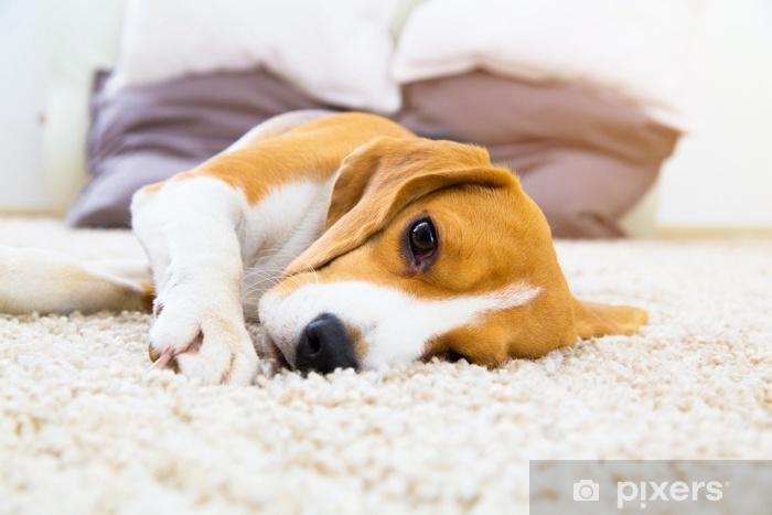 Tappeto Morbido Per Cani : Adesivo cane stanco sul tappeto morbido dopo l allenamento