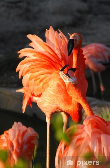Vinyl-Fototapete Flamingo - Vögel