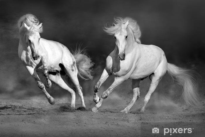 Afwasbaar Fotobehang Cople paard in beweging in de woestijn tegen dramatische donkere achtergrond. zwart en wit beeld - Dieren