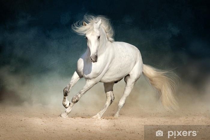 Afwasbaar Fotobehang Witte paard vooruit gerend in stof op een donkere achtergrond - Dieren
