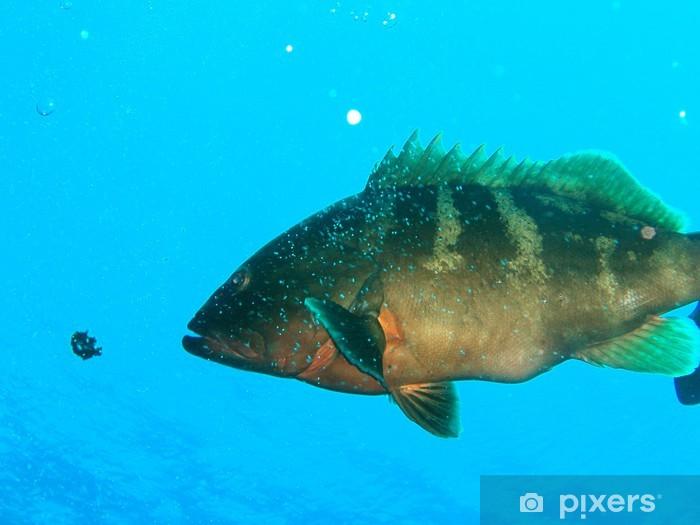 Naklejka Pixerstick Duża ryba - Ssaki