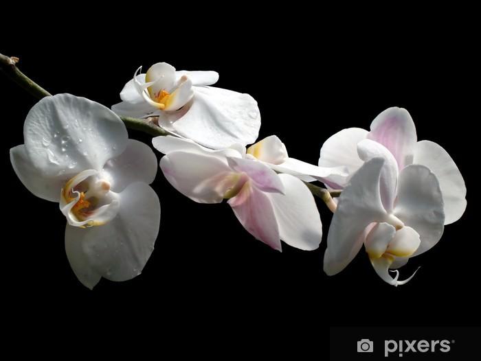 Naklejka Pixerstick Orchid 1 - Uroda i pielęgnacja ciała
