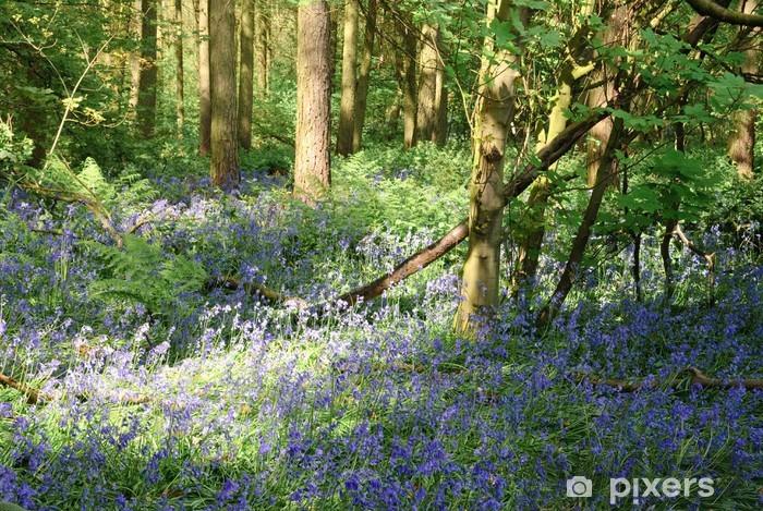 Fotomural Estándar Bluebell bosque - Estaciones