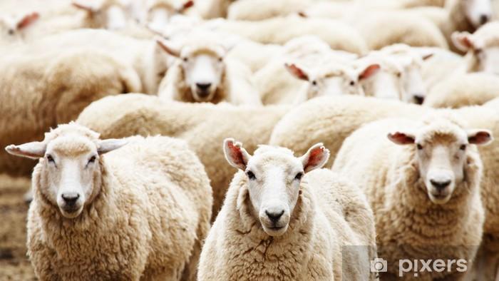 Papier peint vinyle Troupeau de moutons - Agriculture