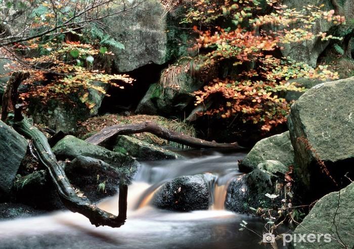 Vinyl-Fototapete Wald fällt - Wasser