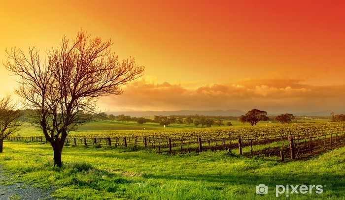 Fototapeta winylowa Pejzaż z winnicą - Łąki, pola i trawy