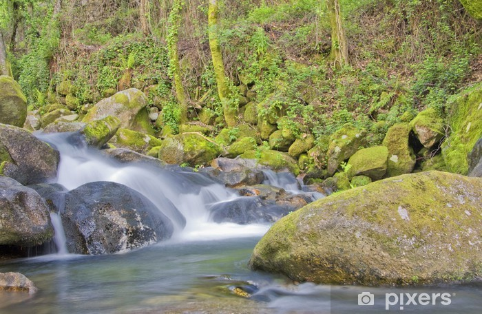 Beauty of the stream Vinyl Wall Mural - Water