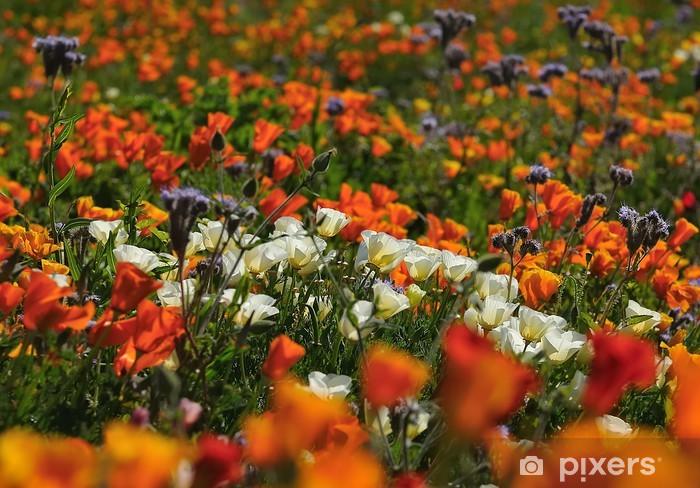 Adesivo Pixerstick Fleurs sauvages arance - Campagna