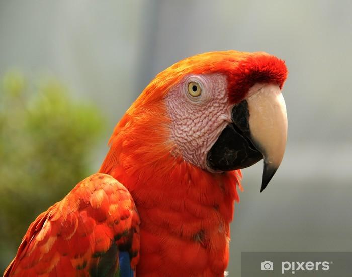 Papier peint vinyle Red Parrot - Thèmes