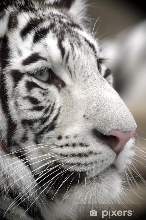 Sticker Pixerstick White Tiger Portrait Close Up - Thèmes