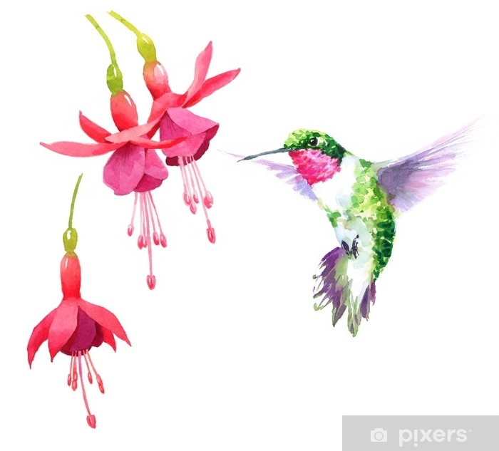 Watercolor Bird Hummingbird Flying Around The Fuchsia Flowers Hand Drawn Summer Garden Illustration Set Isolated On White Background Throw Pillow Pixers We Live To Change