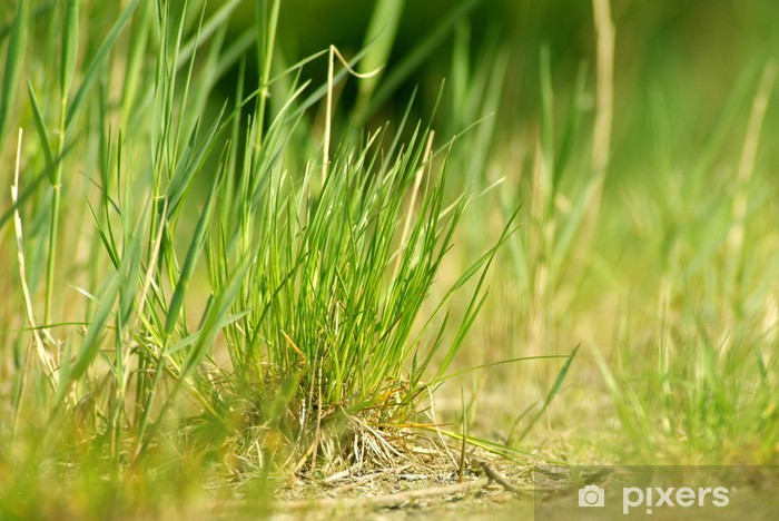 Vinyl-Fototapete Graslandschaft - Pflanzen