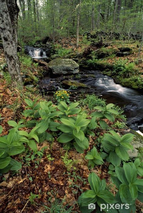 Naklejka Pixerstick Forest stream -