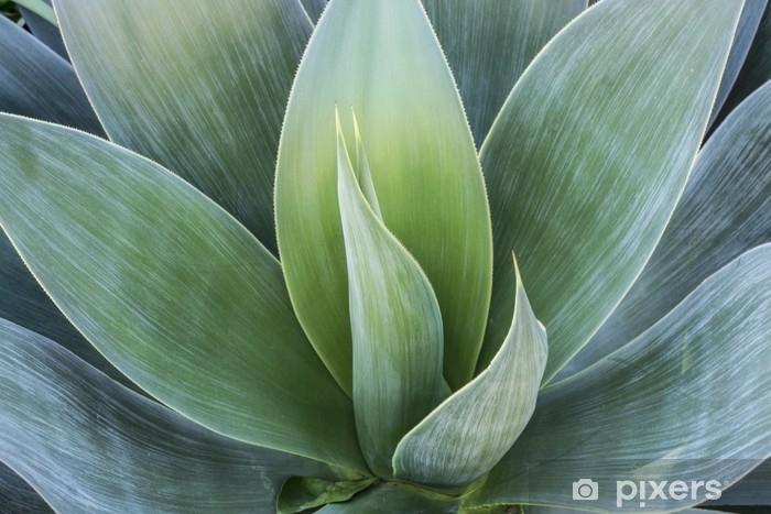 Fotomural Estándar Suculento - Plantas y flores