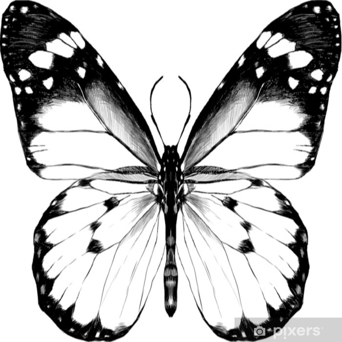 Carta Da Parati Farfalla Con Le Ali Aperte Vista Dallalto Il