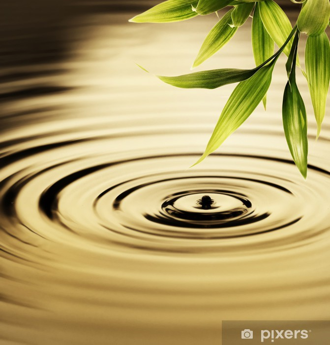Fresh bamboo leaves over water Pixerstick Sticker - Styles
