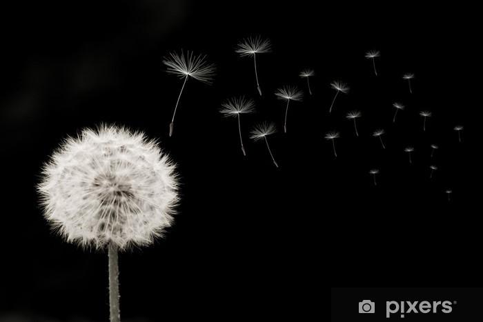 Fototapete Pusteblume, links, samen, viele, quer, schwarz-weiss