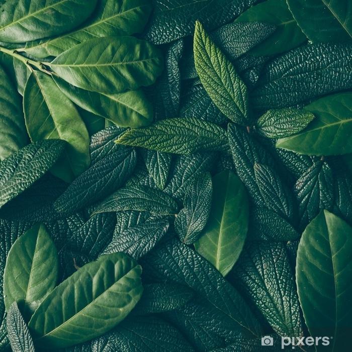 Zelfklevend Fotobehang Creatieve lay-out gemaakt van groene bladeren. plat leggen. natuur concept - Bloemen en Planten