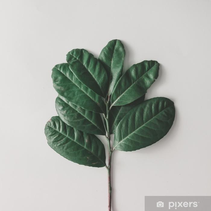 Sticker Pixerstick Arrangement minimal créatif de feuilles sur fond blanc clair. pose à plat. concept de nature. - Plantes et fleurs