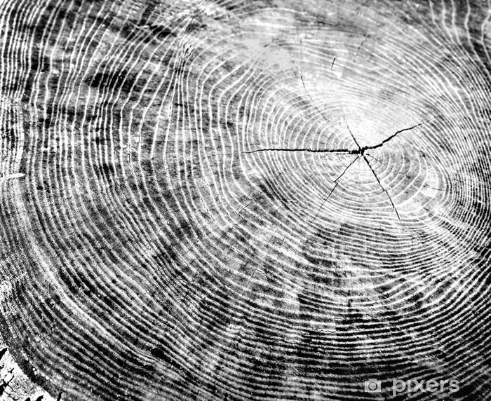 Legno Bianco E Nero : Carta da parati pezzo di legno bianco e nero con anelli degli