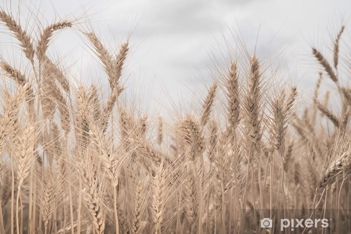 Vinyl Fotobehang Gebied van tarwe afgezwakt in sepia - Landbouw
