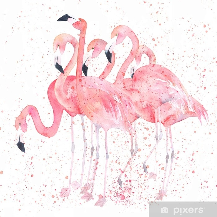 Watercolor flamingos with splash. Painting image Poster - Animals