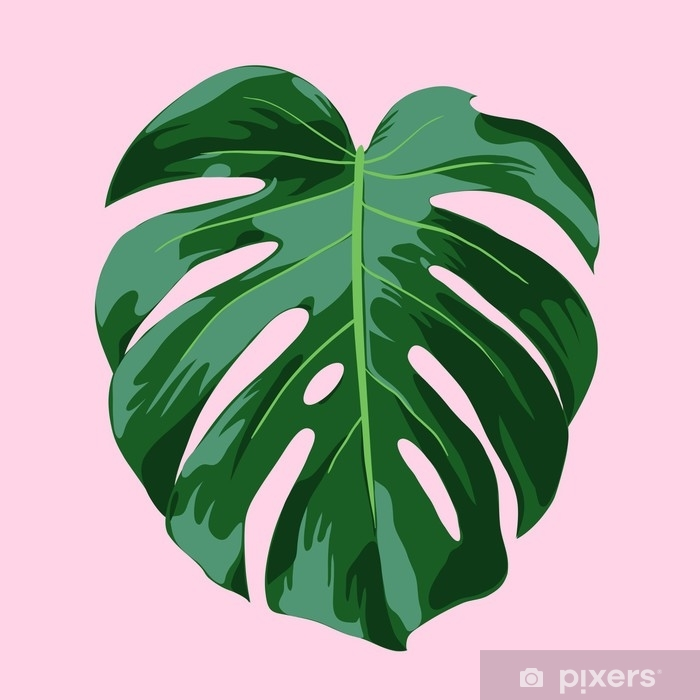 Monstera Tropical Leaf Illustration Wall Mural Pixers We Live To Change Monstera leaves this is a digital file of tropical leaves against a pink background, ready for instant download. monstera tropical leaf illustration wall mural pixers we live to change