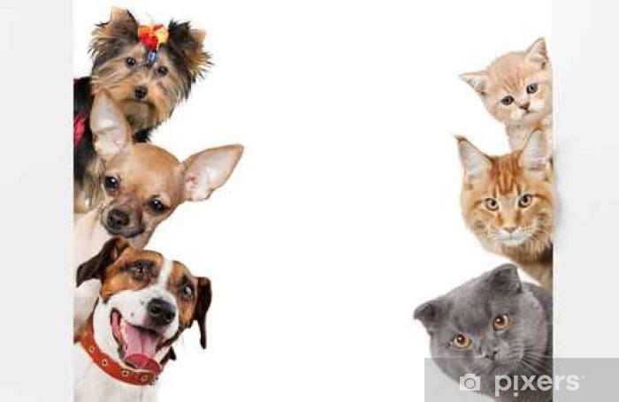 Fototapeta winylowa Pies - Zwierzęta