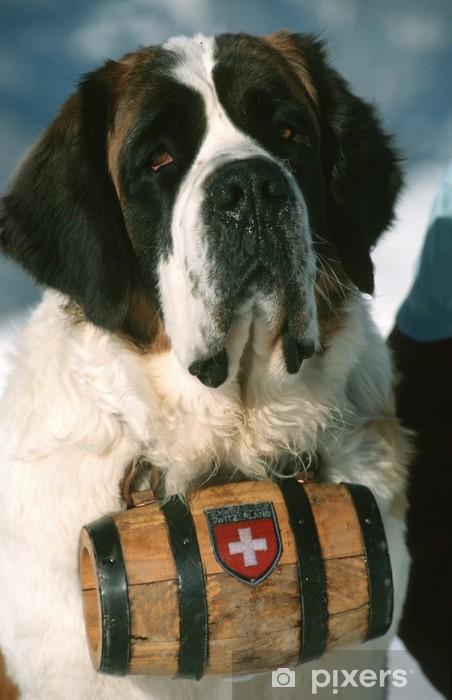 St-bernard chien Pixerstick klistermærke - Pattedyr