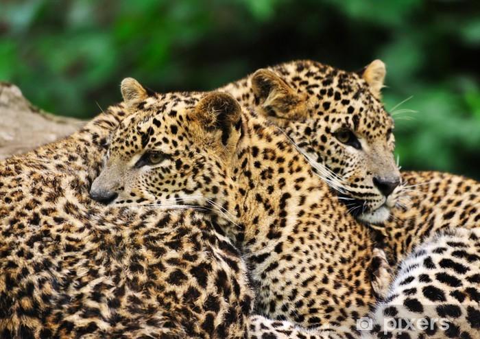 Nálepka Pixerstick Srí Lanka Leopard - Savci