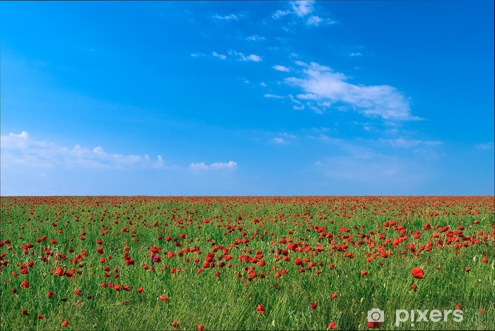 Vinyl-Fototapete Bereich der blühenden Mohnblumen - Blumen