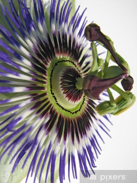 Vinyl-Fototapete Passionsblume Blüte - Blumen