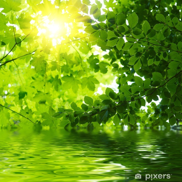 Green leaves reflecting in the water Poster - Themes