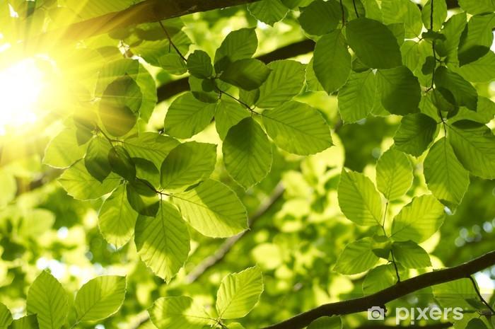 Papier peint vinyle Les feuilles vertes avec rayon de soleil - Thèmes